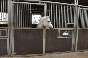 écuries pour chevaux et poney