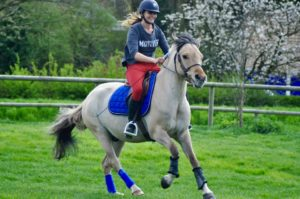 Ecuries des huards, écuries de propriétaires Lille Verlinghem-galop poney valeurs