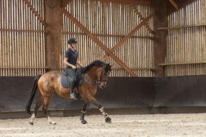 Ecuries des huards, écuries de propriétaires Lille Verlinghem-galop cheval dressage