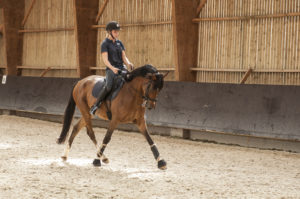 Ecuries des huards, écuries de propriétaires Lille Verlinghem-cheval poney dressage