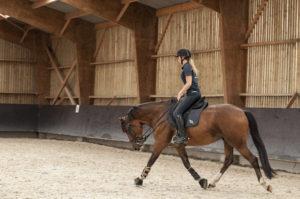 Ecuries des huards, écuries de propriétaires Lille Verlinghem-cheval au trot