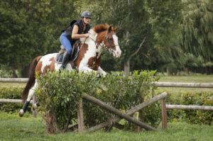 Ecuries des huards, écuries de propriétaires Lille Verlinghem-cheval poney cross complet