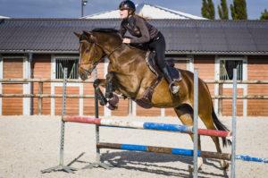 Ecuries des huards, écuries de propriétaires Lille Verlinghem-cheval cso saut d'obstacles concours